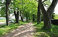 Naturdenkmal Lindenallee in Lößnitz Erzgebirge 2H1A2942WI.jpg