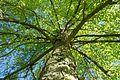 Naturdenkmal Wendlingen-Silcherlinde-81160714208.jpg