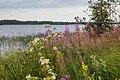 Nature at Kierikki Stone Age Centre Oulu Finland.jpg