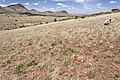 Near Big Gyp Mountain - Flickr - aspidoscelis (2).jpg