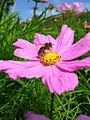 Nectar (277566757).jpg