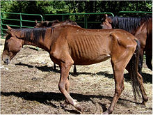 Neglected horse (5884905373).jpg
