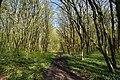 Nekhvoroshcha Volodymyr-Volynskyi Volynska-Nekhvoroshschi nature reserve-view of the nothern part-2.jpg