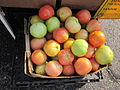 New Orleans Farmers Market Uptown Aug 2011 Creole Tomatoes 2.jpg