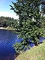 Norra Djurgården, Östermalm, Stockholm, Sweden - panoramio (14).jpg
