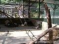 Ocelote Zoo Maracay.jpg