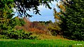 Ogród Botaniczny w Myślęcinku, Bydgoszcz, Polska - panoramio (183).jpg