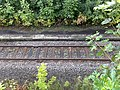 Old Platform, Whatstandwell - geograph.org.uk - 1437483.jpg