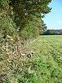 Oldlands Copse - geograph.org.uk - 1001410.jpg