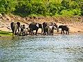 Olifanten langs de Chobe Rivier (6558979009).jpg
