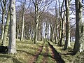 On a track towards Marygoldhill Plantation - geograph.org.uk - 360469.jpg