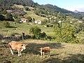 Onao, Cangas de Onis, Asturias - panoramio.jpg