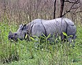 One horn rhino 690V4238 - Flickr - Lip Kee.jpg