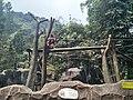 OrangutanBergaya.jpg