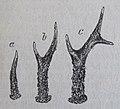 Ottův slovník naučný - obrázek č. 3060.JPG