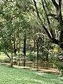 Overflowing creek in Benarrawa Reserve, Corinda, Queensland.jpg