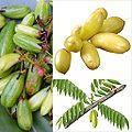 Owoce Bilimbi.jpg