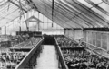 PSM V69 D220 Seed and seedlings in the new york botanical gardens.png
