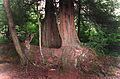 Pacific Rain Forest Sitka(Alaska)(js)02.jpg