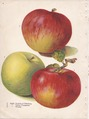 Page 4 apple - Duchess of Oldenburg, Yellow Transparent, Wealthy.tiff