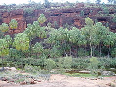 Palm Valley im Finke-Gorge-Nationalpark