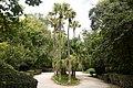 Palms (197710061).jpeg