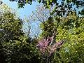 Parc de La Lironde (2397625214).jpg