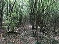 Parcours de santé (Thury) - bois des communes.JPG