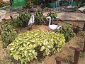 Park plants.jpg
