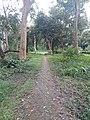 Parmadan Forest 10.jpg