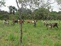 Parque nacional Aguaro-Guariquito 049.jpg