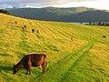 Pastures, Bassenthwaite - geograph.org.uk - 901982.jpg