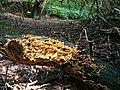 Path, Newton Woods - geograph.org.uk - 247085.jpg
