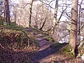 Path beside the River Derwent - geograph.org.uk - 718967.jpg