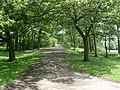 Path in Stanley Park - geograph.org.uk - 1387071.jpg