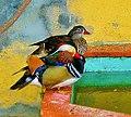 Patos do Jardim do Cerco (472815174).jpg
