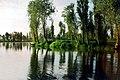 Paz en verde - panoramio.jpg