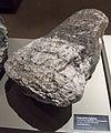 Pegmatitite mylonit, Otago Museum.jpg