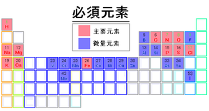 Periodic table of the chemical elements (1-118)必須元素.PNG