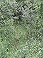 Permskiy r-n, Permskiy kray, Russia - panoramio (1163).jpg