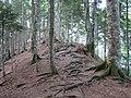 Perućica Forest (3886656871).jpg