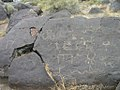 Petroglyph- many symbol rock at Celebration Park Idaho.jpg