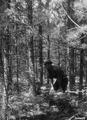 Photograph of District Ranger Schaefer - NARA - 2128381.tif