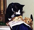 Photograph of Socks the Cat Peeking into his Christmas Stocking- 12-21-1993 (6461512959) (cropped).jpg
