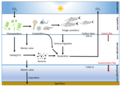 Phytoplankton and the biological carbon pump.webp