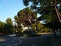 Pi pinyer del carrer Bosch i Gimpera P1510592.jpg