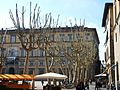 Piazza Napoleone o piazza Grande de Lucca.JPG