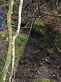 Piccola cascata del rio presso Buca della Volpe - panoramio.jpg