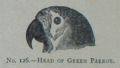 Picture Natural History - No 126 - Head of Green Parrot.png