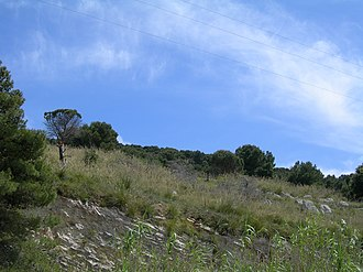 Nature Reserve Bosco di Alcamo - Image: Pineta Mte Bonifato